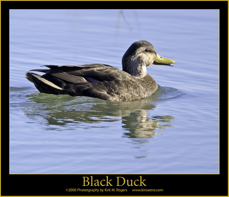 blackduck chat A small hick town in northern minnesota with nothing but a school, a liquor store and a grocery store people here grew up drinking, chewing, smoking and straight up.