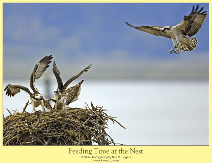 Bird flying from nest - photo#8