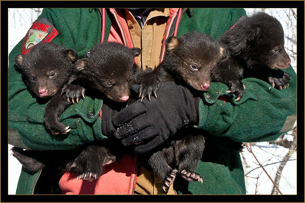 Brothers and Sisters Cubs