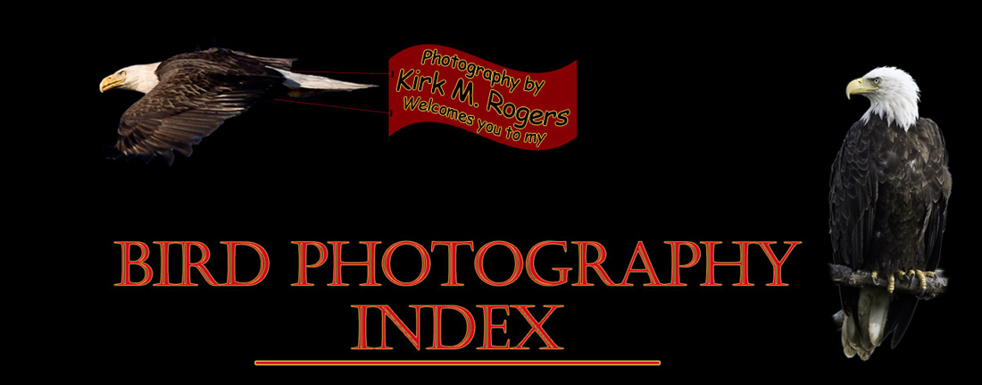 Bird Photography Index - Photography by Kirk M. Rogers