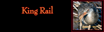 King Rail Gallery