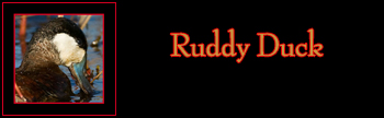 Ruddy Duck Gallery