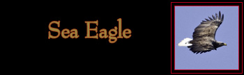 Sea Eagle Gallery