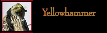 Yellowhammer Gallery