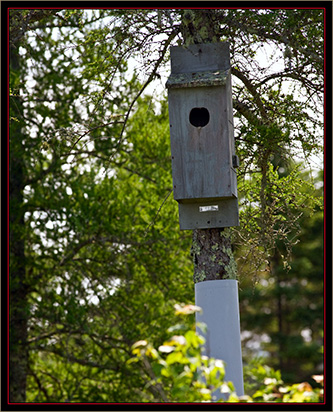 Nesting Box - Carlton Pond Waterfowl Production Area