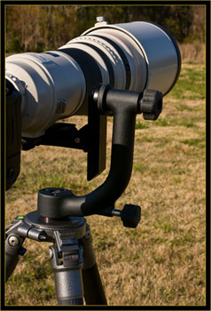 600mm lens on Wimberley Head II