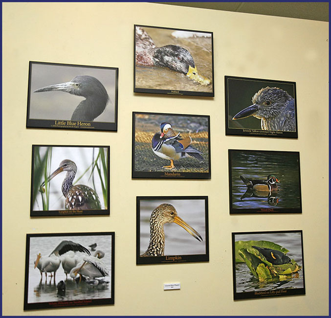 Bird Images on Display