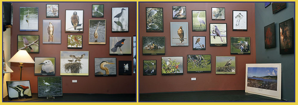 Some of the Bird Images - Kiro Exhibit at Casco Bay Frames