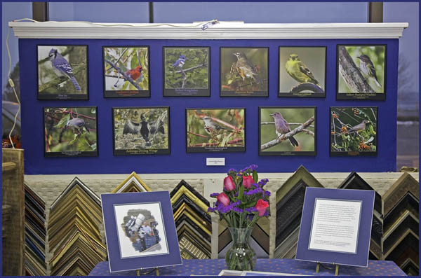 Bird Images on Display near the storefront