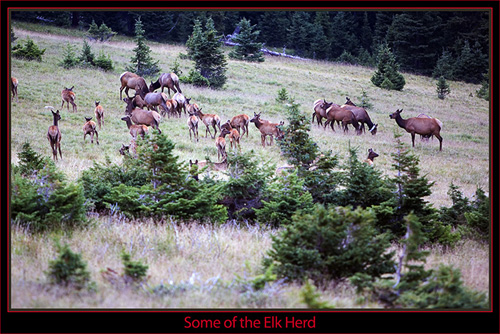 Elk Group
