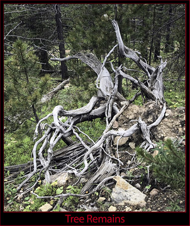 Deadwood Along the Trail