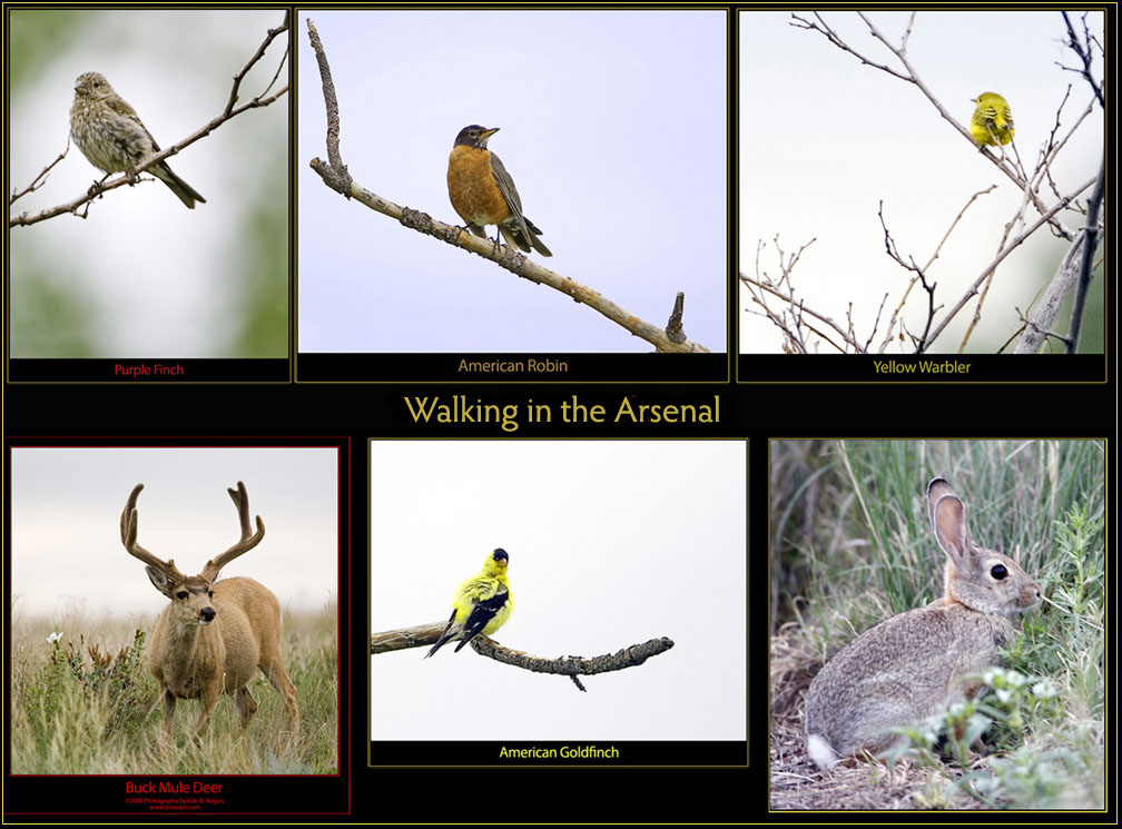 Walking & Imaging at the Arsenal