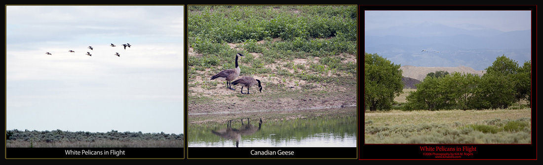 More Birds on the Tour