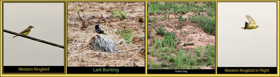 Birds on the Tour