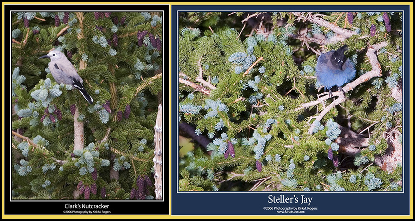 Birds in the High Pines