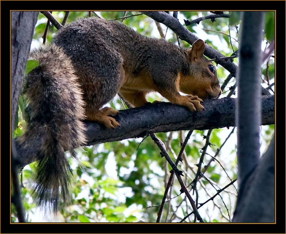 View in Wyoming - Red squirrel