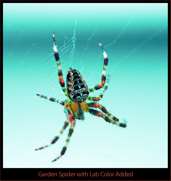 Garden Spider with Color Added