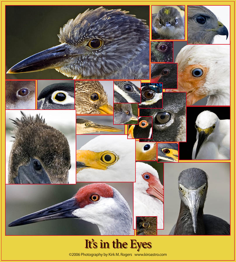 Bird Eyes Images