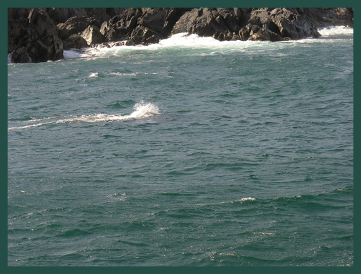 The Lonely Humpback