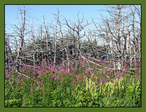 At The Arches