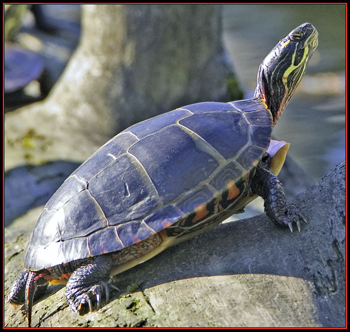 Turtle Fullview
