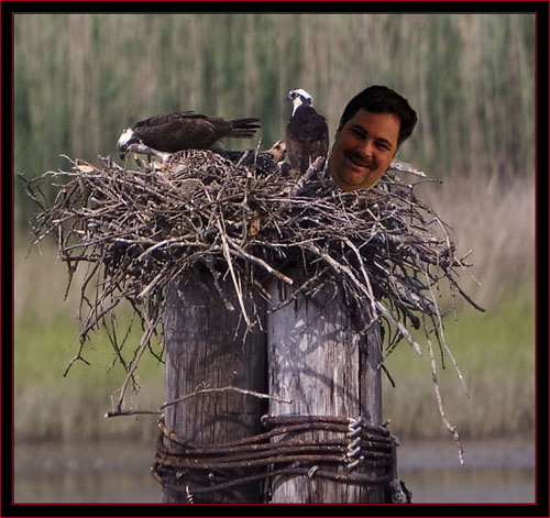 Billy-Bob in the Nest