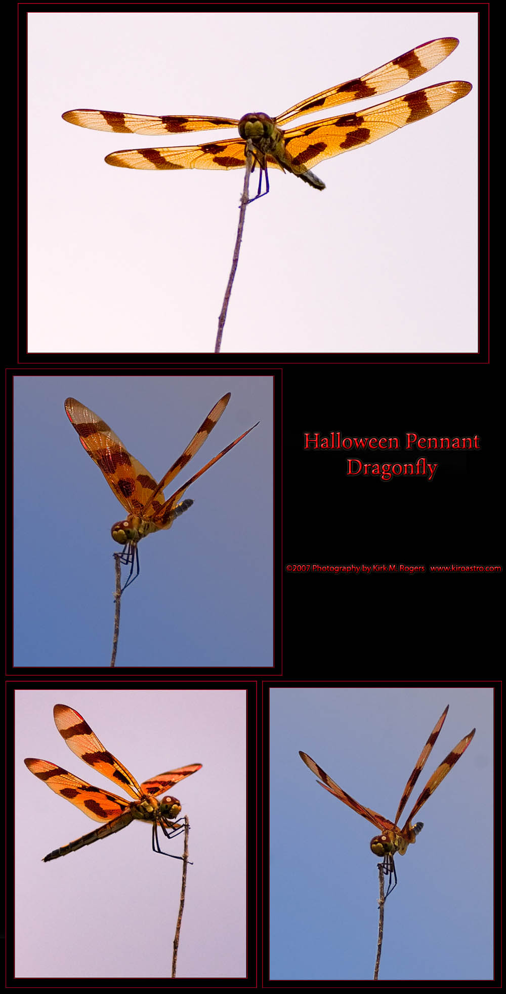 Halloween Pennant - Dragonfly