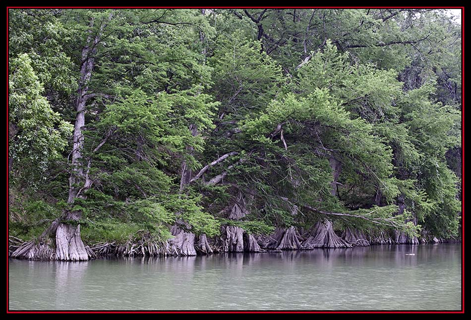View Along the Guadalupe River, Spring Branch, Texas