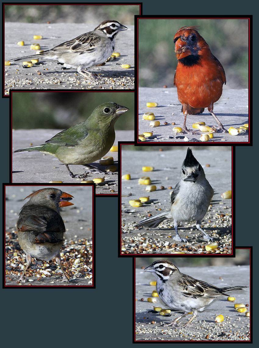 A Few Bird Photographs from the General Store