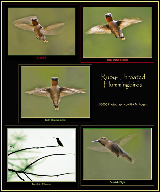 Hummingbird Composite