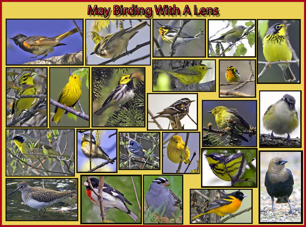 May Birding with a Lens