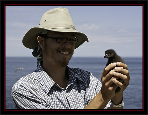David Vonk with Black Guillemot Chick - Matinicus Rock