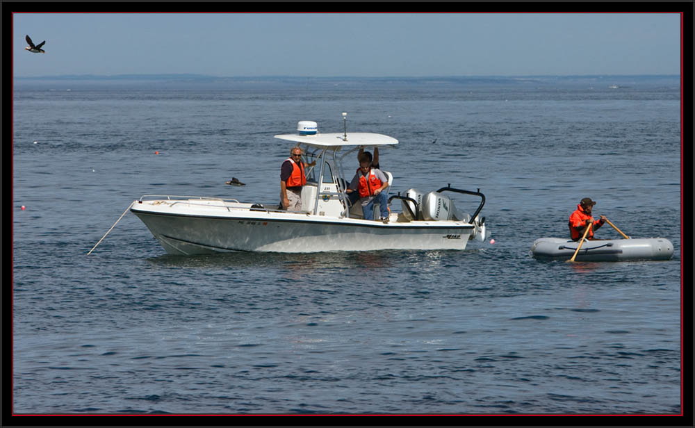 Boat and Passengers Surrounded by Puffins - Maine Coastal Islands National Wildlife Refuge