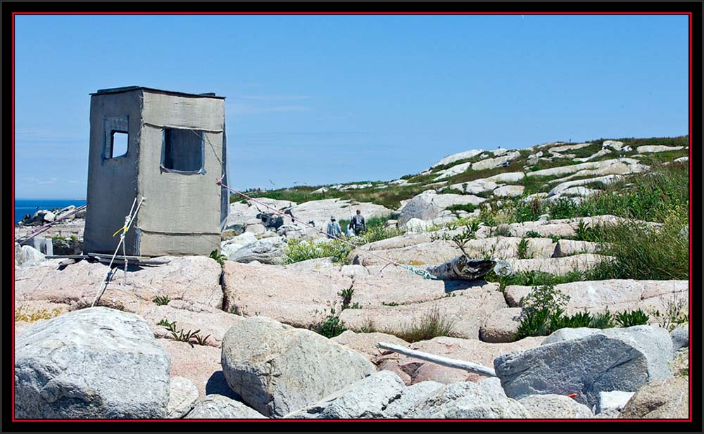 Observation Blind on the Ledge - Matinicus Rock