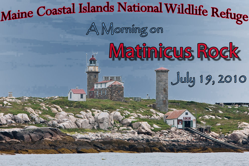 Photography from Matinicus Rock - Maine Coastal Islands National Wildlife Refuge