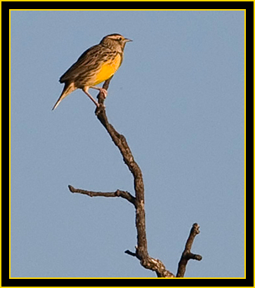 Rob's Shot of an Eastern Meadowlark - Wichita Mountains Wildlife Refuge