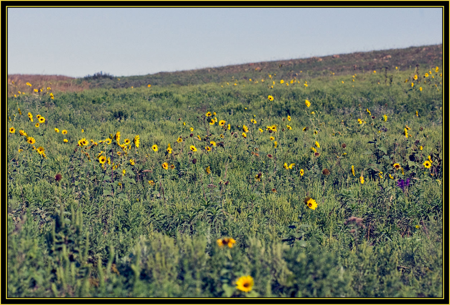 Wildflowers, Wide field view with a macro lens - Wichita Mountains Wildlife Refuge