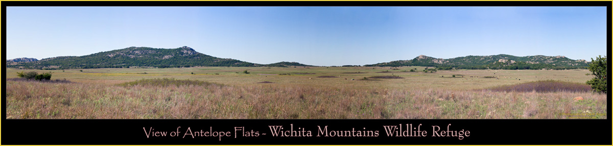 Panoramic view of Antelope Flats with American Bison & Texas Longhorns grazing - Wichita Mountains Wildlife Refuge