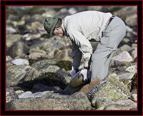 Pat Corr Clearing the Path in the Capture Zone - Petit Manan Island - Maine Coastal Islands National Wildlife Refuge