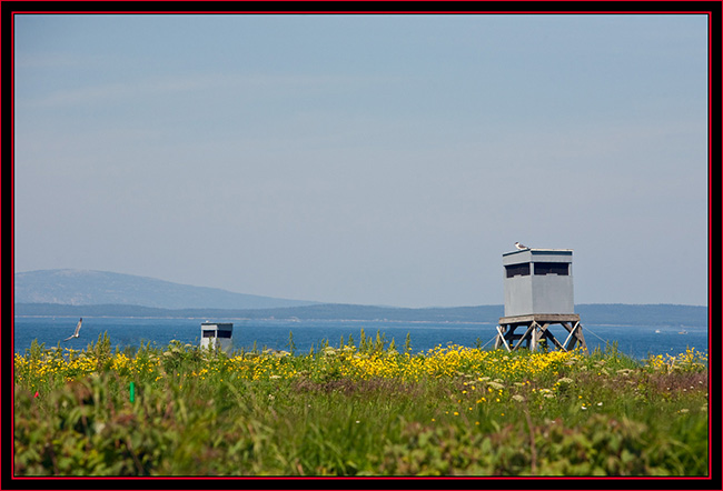 Observation Blinds on Petit Manan Island - Maine Coastal Islands National Wildlife Refuge