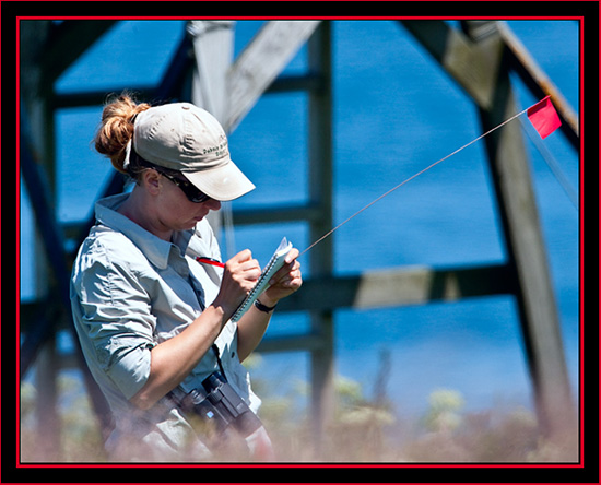 Amanda Boyd Working with the Terns- Maine Coastal Islands National Wildlife Refuge