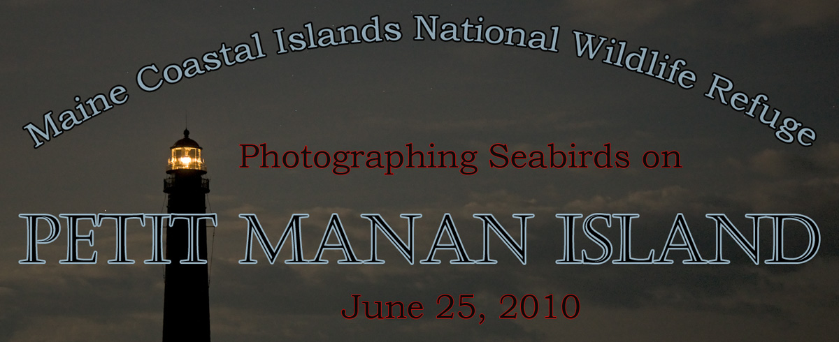 Photographing Seabirds on Petit Manan Island, Maine Coastal Islands national Wildlife Refuge