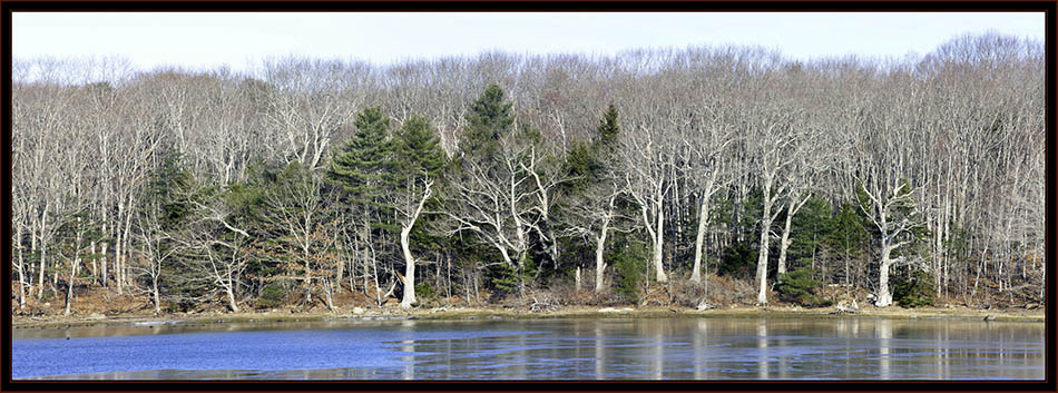 Treeline and Water - Phippsburg, Maine