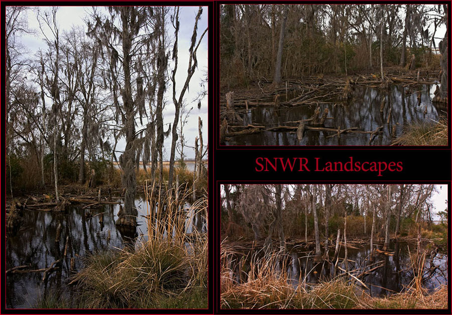 SNWR Landscapes