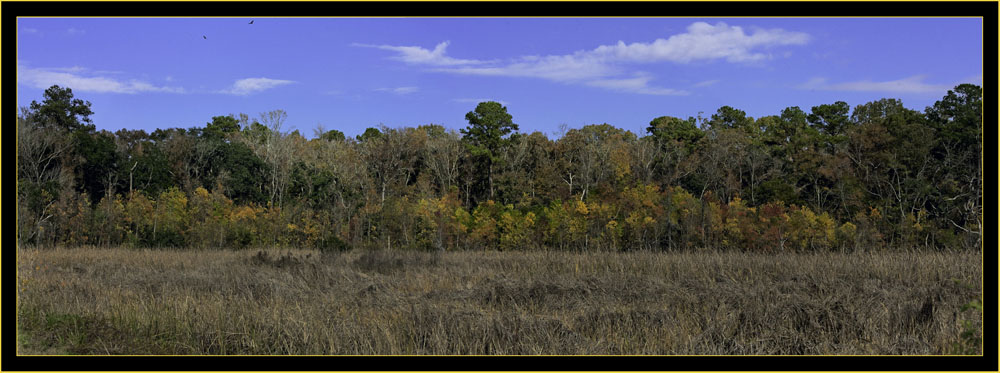 View from Donnelly Wildlife Management Area - Green Pond, South Carolina