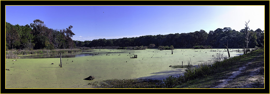 Composite View of Woody Pond - Harris Neck National Wildlife Refuge