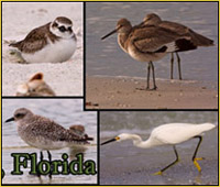Bird Images from Fort DeSoto