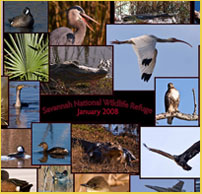 Photocollage - Savannah National Wildlife Refuge