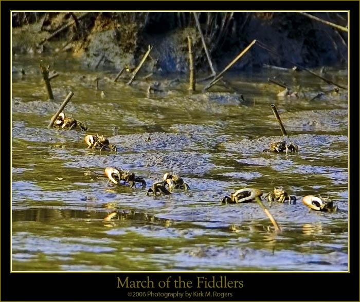 March of the Fiddlers