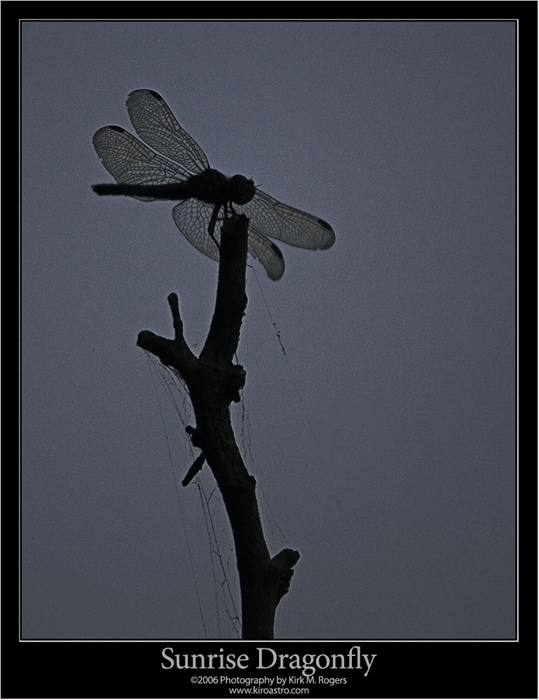 Early Morning Dragonfly Image